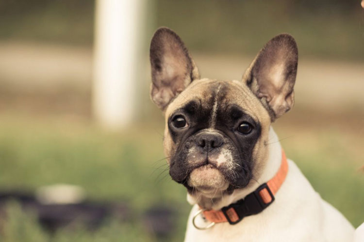 Best-Bark-Collars-for-Small-Dogs