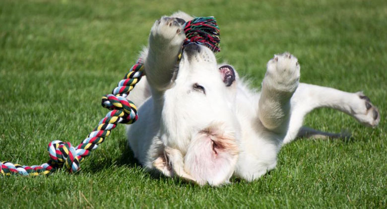 best-dog-rope-toy