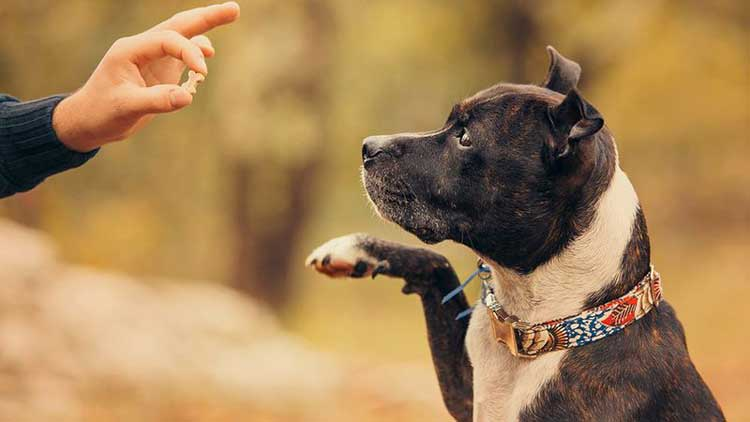 best-hip-and-joint-supplement-for-dogs