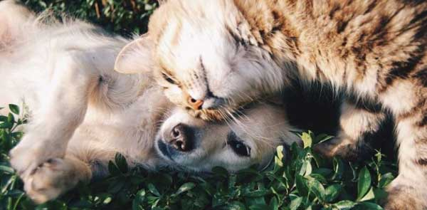 Reasons Why Dogs Are Better Than Cats