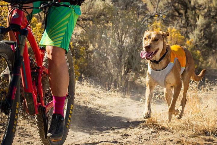 Best-Dog-Cooling-Vest-1