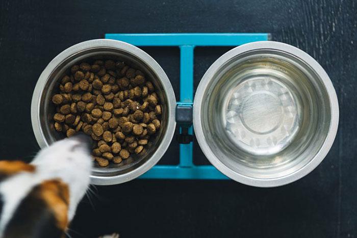 Best-Dog-Food-For-Hypothyroidism