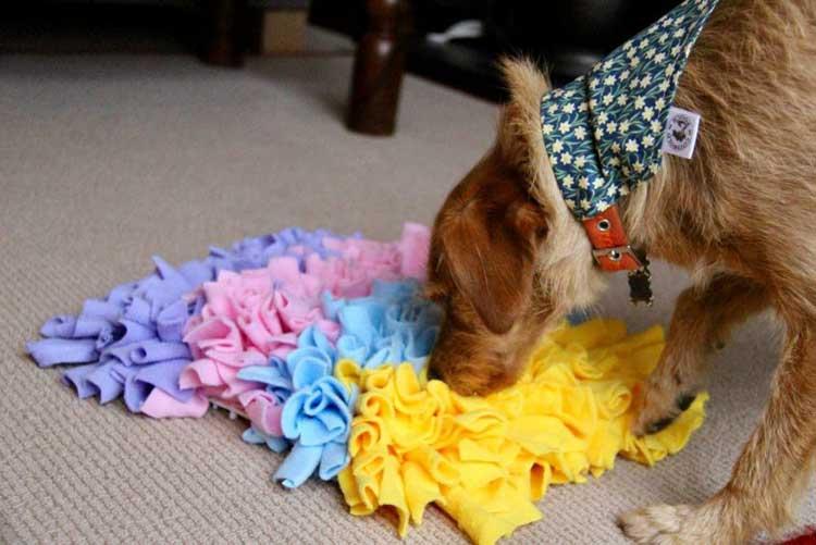 Dog-Enrichment-Toys