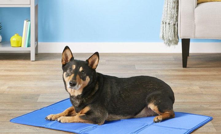 best-dog-cooling-mat