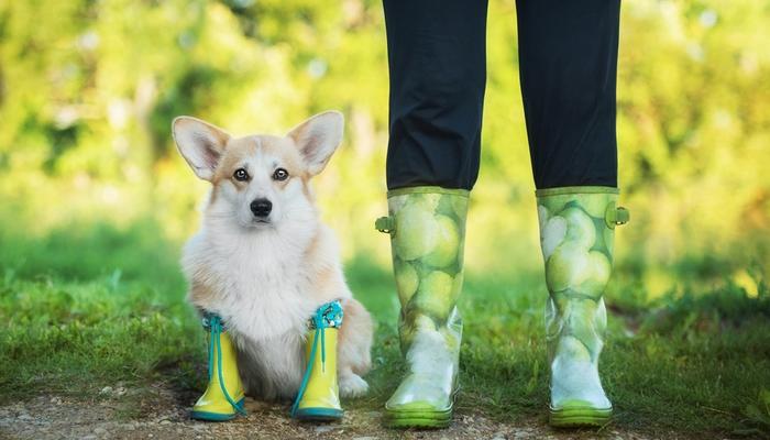 best-dog-rain-boots