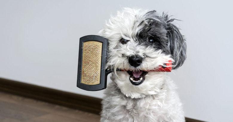 best-dog-undercoat-brush