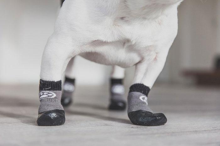 best-socks-for-dogs