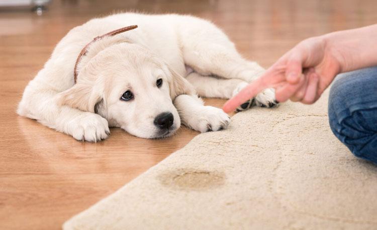dog-urine-enzyme-cleaner