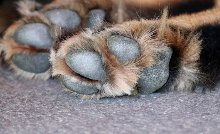 Best-Dog-Paw-Pads