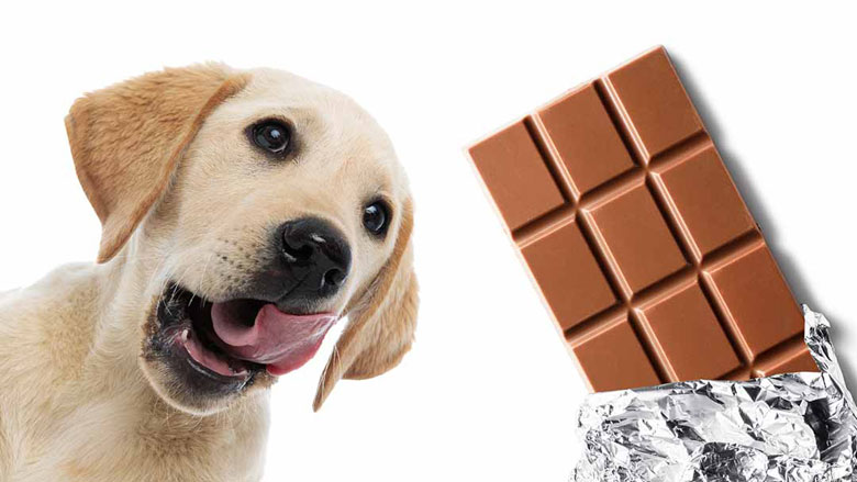 Can-Dogs-Eat-Chocolate-LS-long