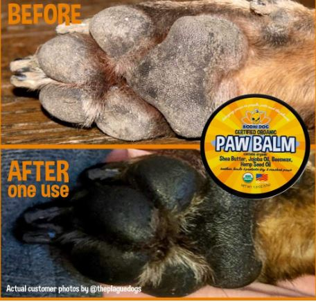 Best Dog Paw Balms for Care of Your Furry Friend