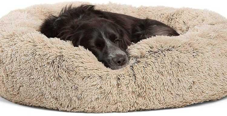 Best-Friends-By-Sheri-dog-bed-
