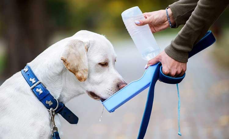 Best-15-Portable Bottles for dog