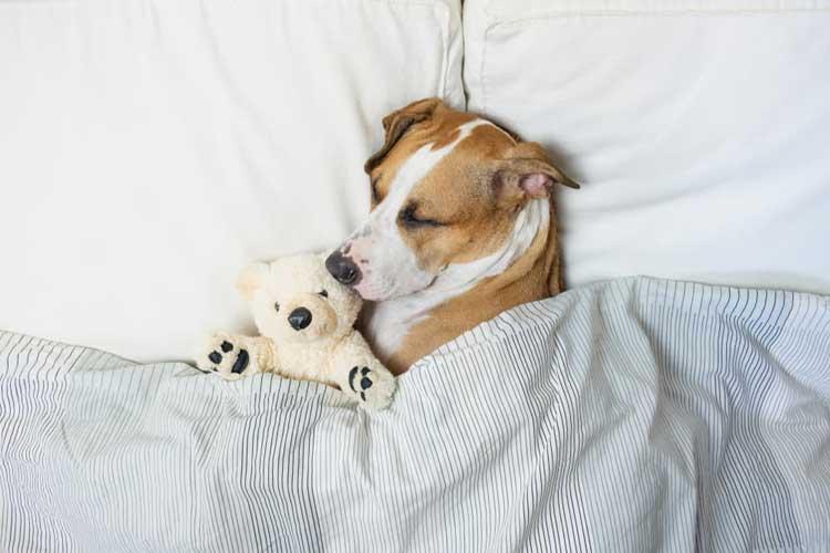 Can-you-give-a-dog-melatonin
