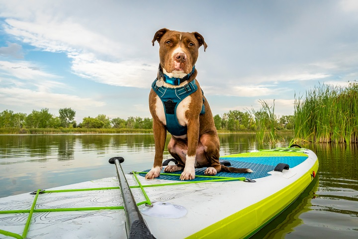 Best Escape Proof Dog Harness