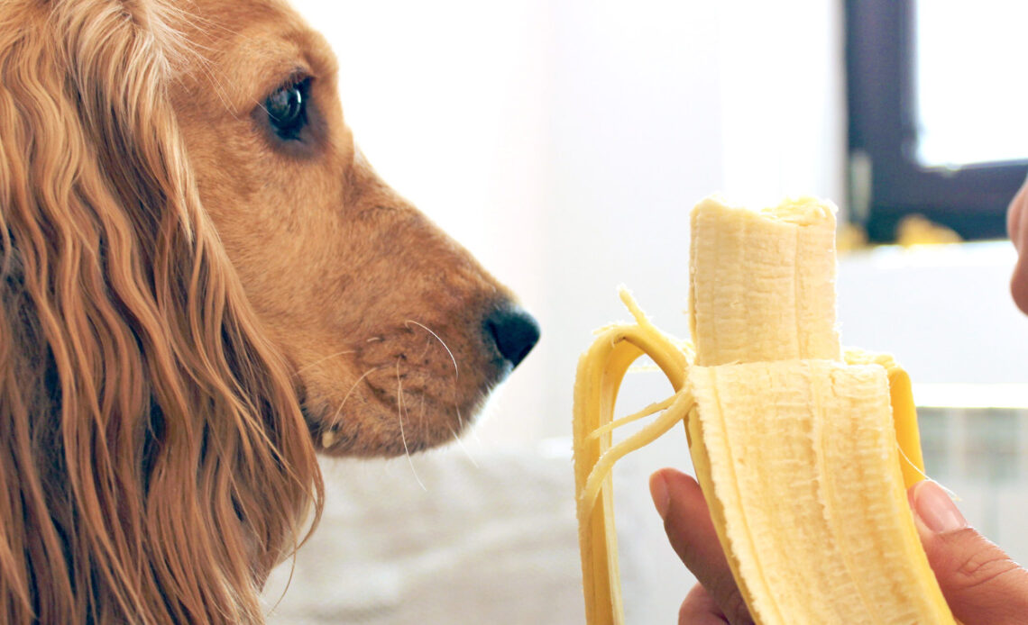 Can Dog Eat Banana