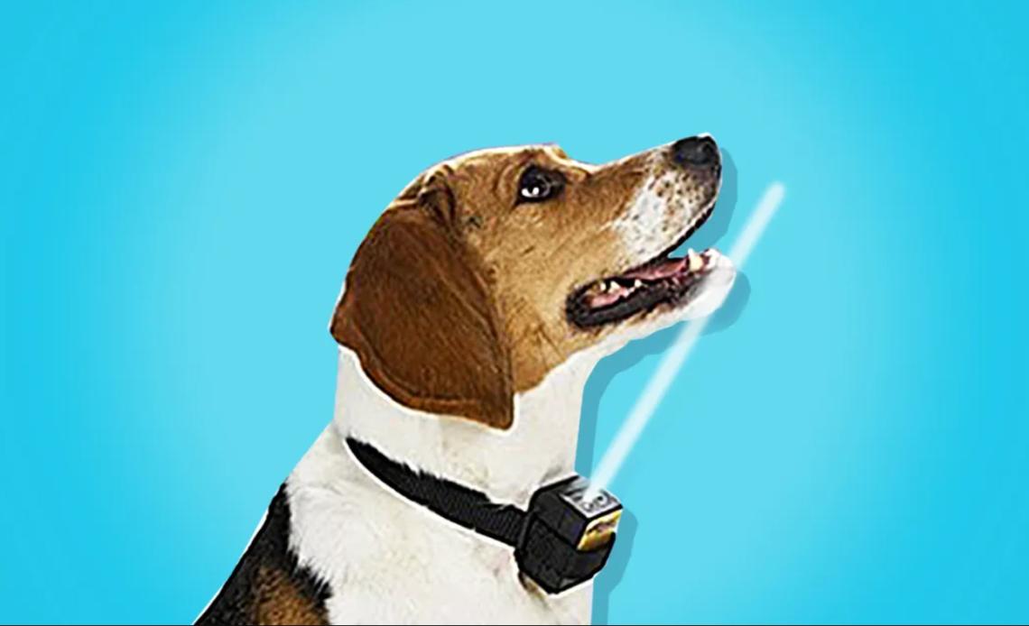 pet-safe-bark-collar-review