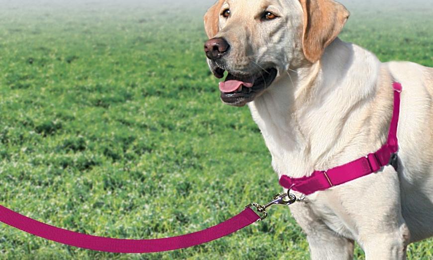 pet-safe-easy-walk-harness