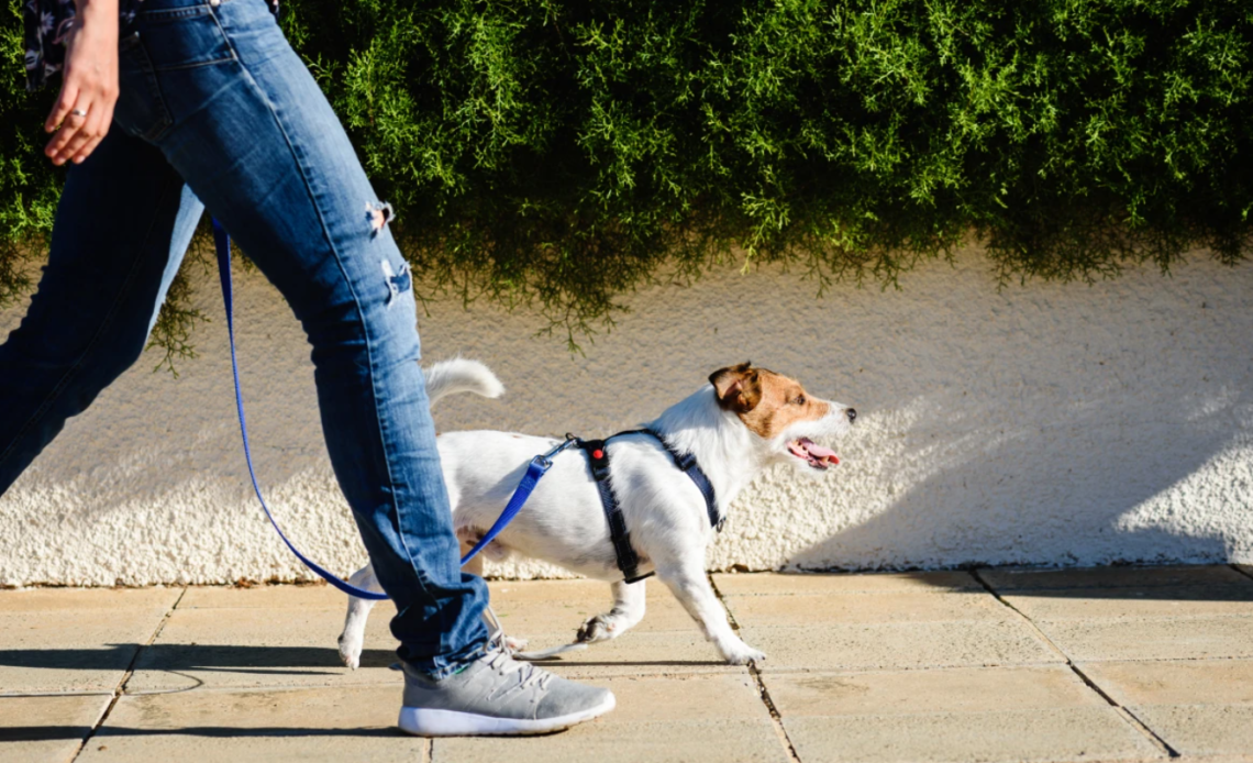 dog-harness-to-prevent-chafing