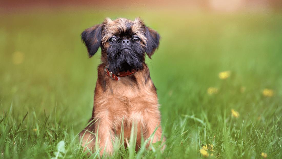 affectionate dog breeds