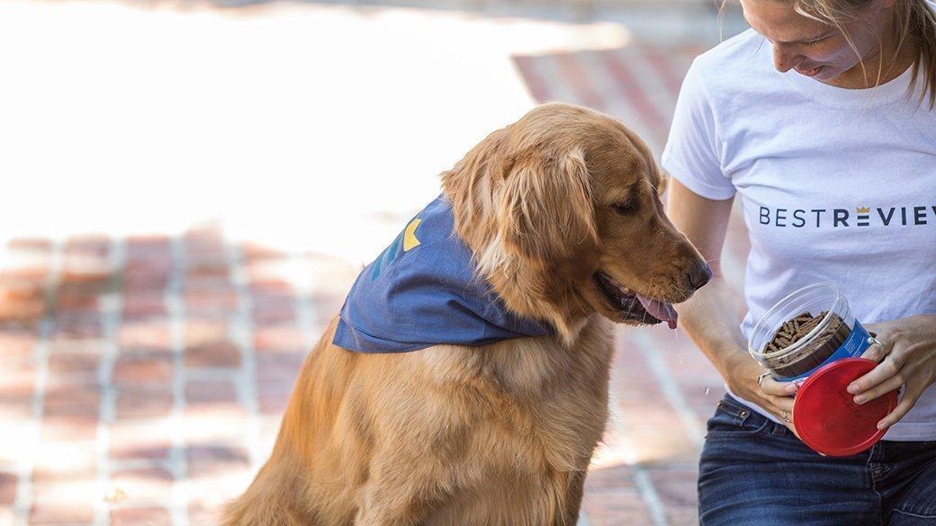 the-best-calming-dog-treat